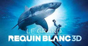 GREAT WHITE SHARK 3D (CNW Group/Montreal Science Centre)