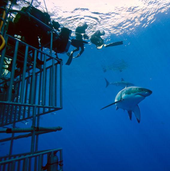 Frederic Buyle et William Winram_Tournage Plongeurs et requin © Luke Cresswell